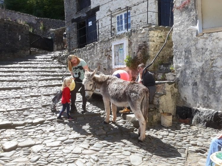 Loveable Clovelly donkeys
